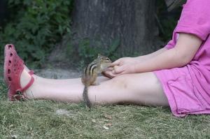 Lindsay's Chipmunk Encounter - Flickr