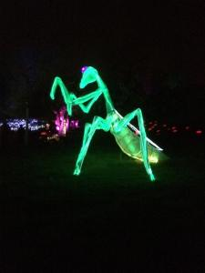 Where else can you see a giant mantis?